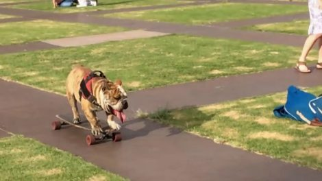 Logan-perro-patinador-de-la-UNAM-UNAMGlobal
