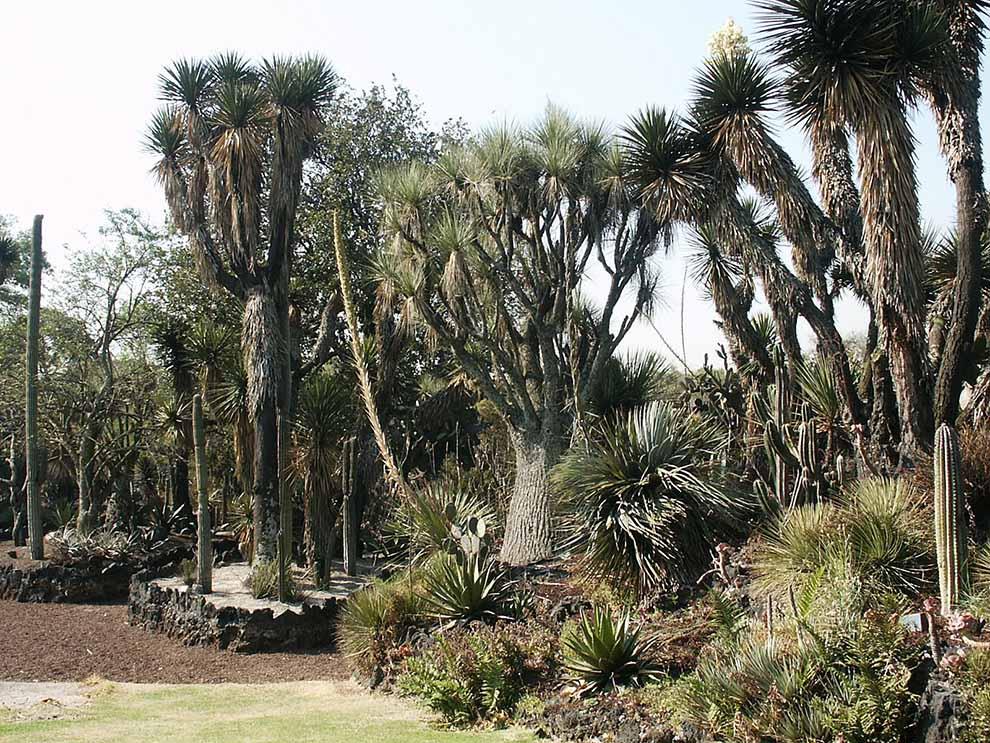 Jardín-Botánico-oasis-aves-UNAMGlobal