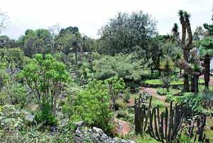 Jardín-Botánico-vida-silvestre-UNAMGlobal