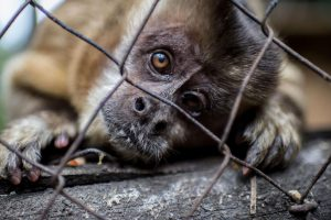 trafico-especies-veterinaria-UNAMGlobal