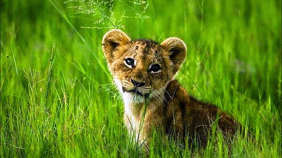 Naturaleza-día-Mundial-Protección-UNAMGlobal
