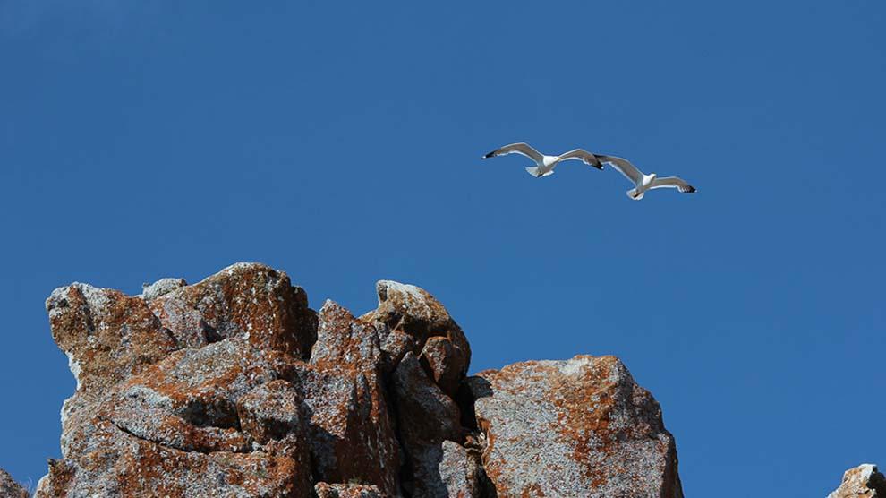 Aves-grupo-de-observación-FacCiencias-UNAMGlobal