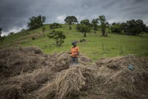 Agricultura-clave-contra-cambio-climático-ONU-UNAMGlobal