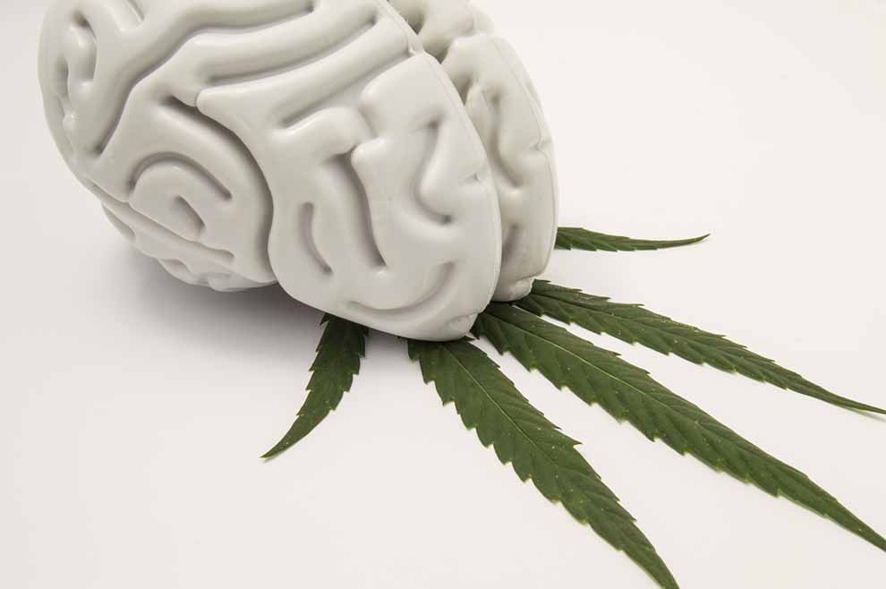 The figure of the human brain lies on a green leaf of hemp. The