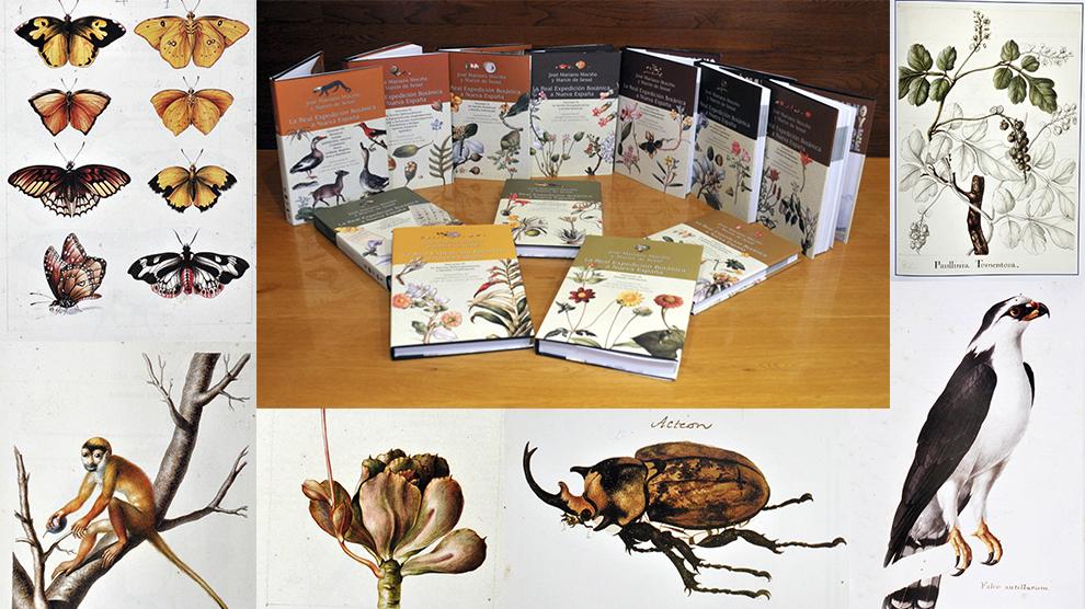 Botánica-Expedición-Nueva-España-UNAMGlobal