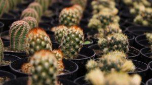 Cactus-plantas-del-futuro-UNAMGlobalR
