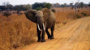 Elephant-luchadores-excepcionales-contra-cáncer-UNAMGlobal