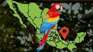 Guacamaya-roja-menos-de-200-en-Libertad-UNAMGloba
