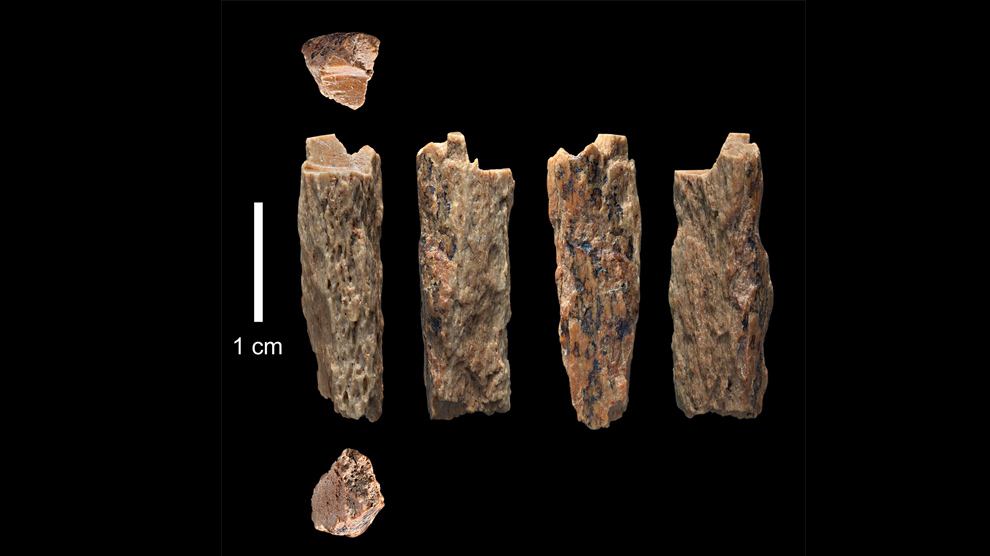 Nean-encuentran-restos-especies-humanas-UNAMGlobal