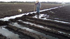 Uso-eficiente-del-agua-en-la-agricultura-portada-UNAMGlobal