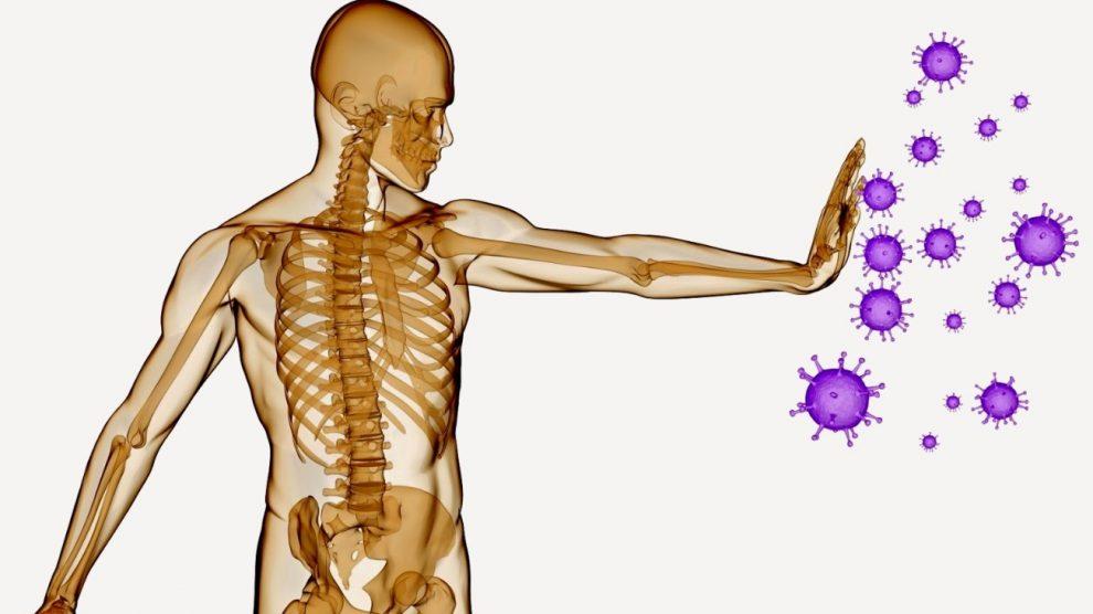 Descubren nueva estructura anatómica dentro del sistema inmune | UNAM Global