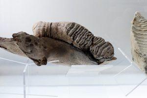 Mixteca-poblana-cien-millones-años-UNAMGlobalR