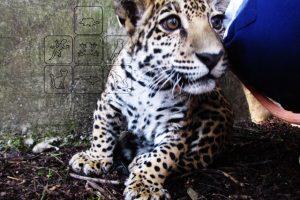 Consultas-mascotas-Silvestres-UNAMGlobalR