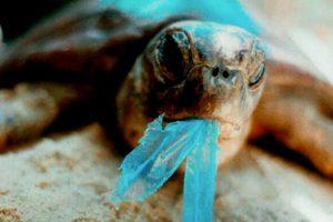 Tortuga-¿comemos-plástico?-UNAMGlobal