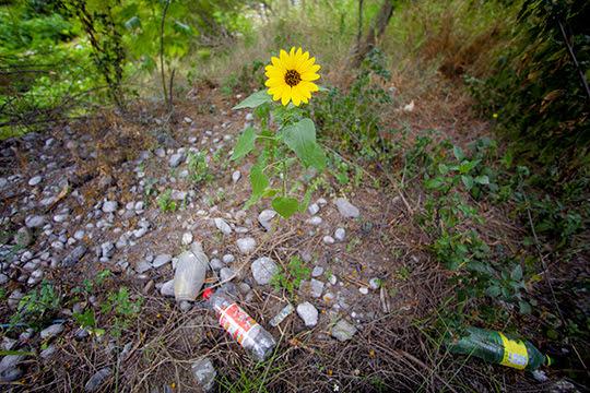 Cruzada- medio- ambiente-UNAMGlobal