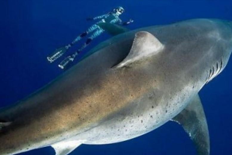 Genoma-Tiburón-Blanco-protección-contra-cáncer-9-UNAMGlobalR