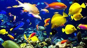 Calentamiento-Océanos-poblacion-peces-UNAMGlobal