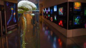 Museo-UNIVERSUM-dos-por-uno-UNAMGlobal