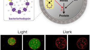 Logran-células-sinteticas-UNAMGlobal