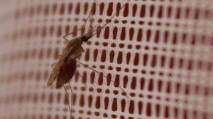 Insectos-resistentes-a-insecticidas-UNAMGlobal