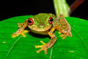 Pérdida-de-anfibios-por-enfermedad-fúngica-UNAMGlobal