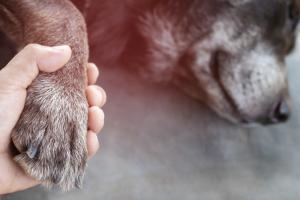 afrontar-muerte-mascotas-envejecerán-enfermarán-UNAMGlobal
