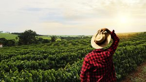 Farmer-working-on-coffee-field-at-sunset-outdoor-UNAMGlobal