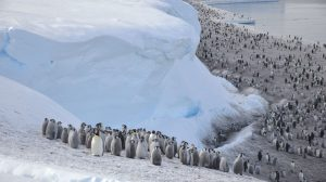 penguins_main-UNAMGlobal