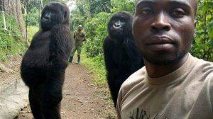 selfie-gorilas-santuario-orfanato-Congo-UNAMGlobal