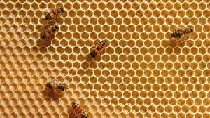 veneno-abeja-precerva-capacidad-motora-memoria-UNAMGlobal