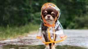 tips-proteger-mascotas-epoca-lluvias-UNAMGlobal