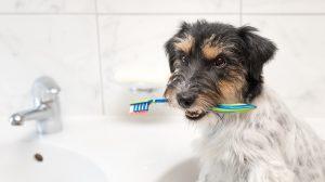 fundamental-salud-mascota-limpieza-dental-UNAMGlobal