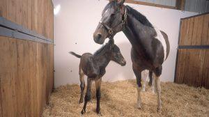 charla-implicaciones-clonación-caballos-deportivos-FMVZ-UNAMGlobal
