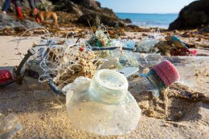 Wasteocean-microbios-comen-residuos-plásticos-UNAMGlobal