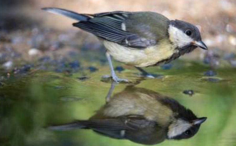 Carbonero-especies-no-logran-adaptarse-UNAMGlobal
