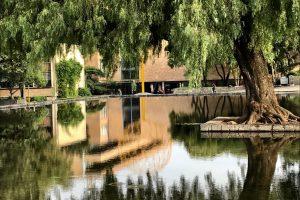 espejo-agua-árbol-CU-UNAMGlobal