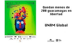 Munic-2019-menos-de-20Guacamayas-UNAMGlobal