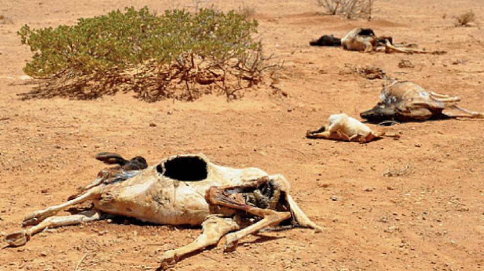 Cambio-climático-riesgo-agua-comida-en-el-planeta-UNAMGlobal