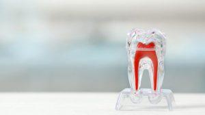 Teeth-roots-growth-web-824x549-dentistas-UNAMGlobal