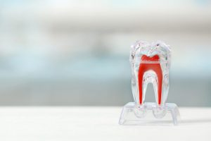 Teeth-roots-growth-web-824x549-dentistas-UNAMGlobal