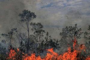 amazonas-deforestación-Brasil-cambio-climático-UNAMGlobal