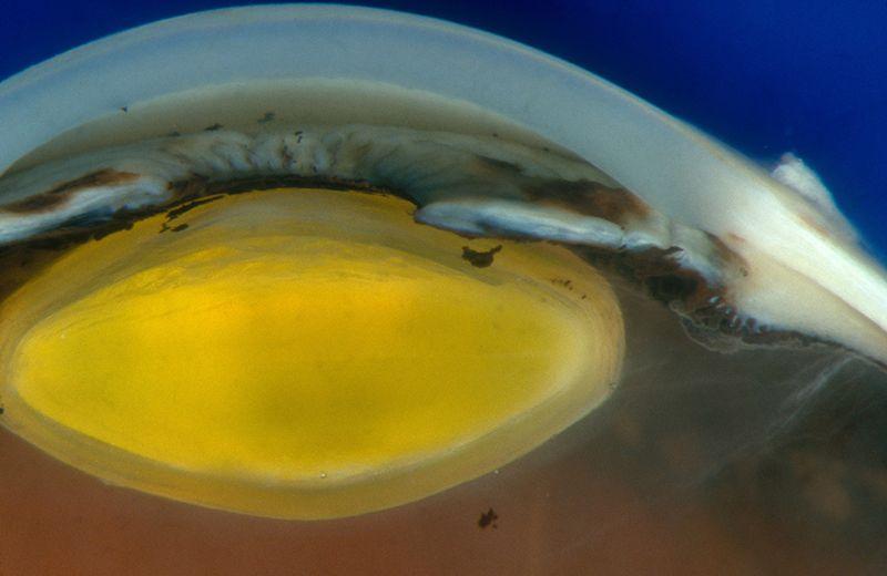 cornea-células-madre-reprogramadas-UNAMGlobal