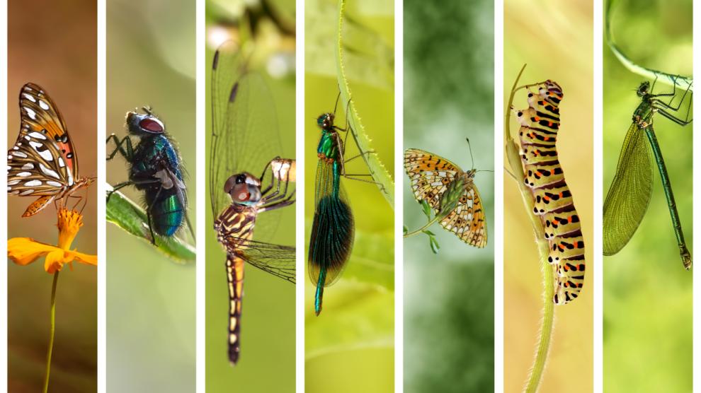 insectos-cambio-climático-muerte-declive-UNAMGlobal