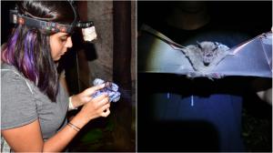estancia-investigación-CostaRica-biólogos-ciencias-UNAMGlobal