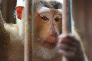 animales-derechos-ley-protección-animal-UNAMGlobal