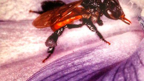 chapulines11-gusanos-rojos-maguey-hormigas-arte-comer-UNAMGlobal