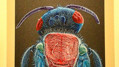 chapulines10-gusanos-rojos-maguey-hormigas-arte-comer-UNAMGlobal
