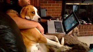 perros-sentimientos-emociones-humanas-celos-UNAMGlobal