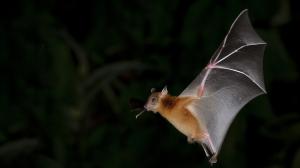 murciélago-importante-diversos-ecosistemas-polinizadores-control-plagas-UNAMGlobal